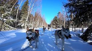 Dog sledding-Luleå-Drive Your Own Dog Sled in Swedish Lapland-1
