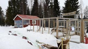 Dog sledding-Luleå-Drive Your Own Dog Sled in Swedish Lapland-5