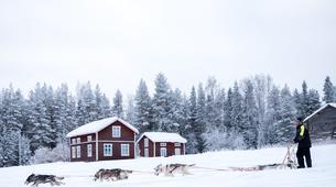 Dog sledding-Luleå-Drive Your Own Dog Sled in Swedish Lapland-6