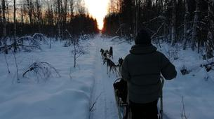 Dog sledding-Luleå-Drive Your Own Dog Sled at Night in Swedish Lapland-3