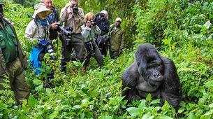 Hiking / Trekking-Kampala-12-Day Ultimate East African Wildlife Tour-2