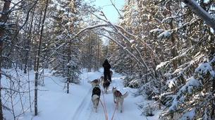 Dog sledding-Luleå-Drive Your Own Dog Sled in Swedish Lapland-4