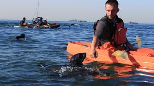 Sea Kayaking-Walvis Bay-Sea Kayaking excursion in Walvis Bay, Namibia-6