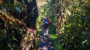 Hiking / Trekking-Cirque de Salazie, Hell-Bourg-Hiking excursion at Bélouve and Le Trou de Fer, Réunion-3