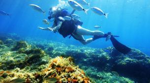 Scuba Diving-Palma, Mallorca-Scuba Diving in a marine reserve near Palma, Mallorca-1