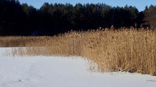 Snowshoeing-Vilnius-Kicksledding Excursion in Labanoras Regional Park-3