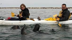 Sea Kayaking-Walvis Bay-Sea Kayaking excursion in Walvis Bay, Namibia-4