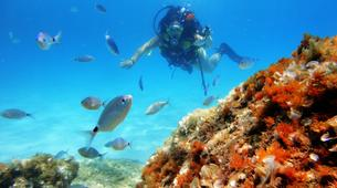 Scuba Diving-Palma, Mallorca-Scuba Diving in a marine reserve near Palma, Mallorca-3