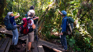 Hiking / Trekking-Cirque de Salazie, Hell-Bourg-Hiking excursion at Bélouve and Le Trou de Fer, Réunion-2