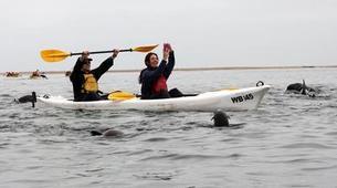 Sea Kayaking-Walvis Bay-Sea Kayaking excursion in Walvis Bay, Namibia-3