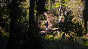 Hiking / Trekking-Cirque de Salazie, Hell-Bourg-Hiking excursion at Bélouve and Le Trou de Fer, Réunion-4