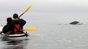 Sea Kayaking-Walvis Bay-Sea Kayaking wildlife adventure in Walvis Bay, Namibia-1