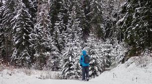 Snowshoeing-Vilnius-Kicksledding Excursion in Labanoras Regional Park-1