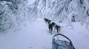 Dog sledding-Kiruna-Dog Sledding & Traditional Lunch Tour-1