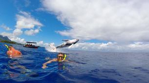 Experiences Wildlife-Bora Bora-Excursion nage et rencontre avec les baleines-1