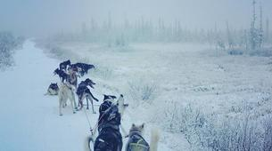 Dog sledding-Kiruna-Dog Sledding & Traditional Lunch Tour-2