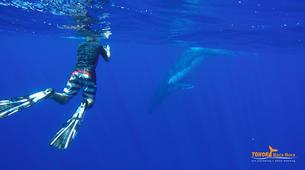 Experiences Wildlife-Bora Bora-Excursion nage et rencontre avec les baleines-3