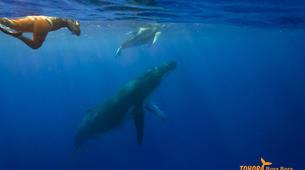 Experiences Wildlife-Bora Bora-Excursion nage et rencontre avec les baleines-4