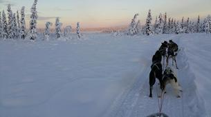 Dog sledding-Kiruna-Dog Sledding & Traditional Lunch Tour-3