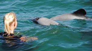 Wildlife Experiences-Akaroa-Swimming with Dolphins in Akaroa-5