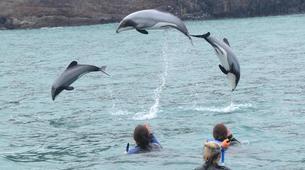 Wildlife Experiences-Akaroa-Swimming with Dolphins in Akaroa-3