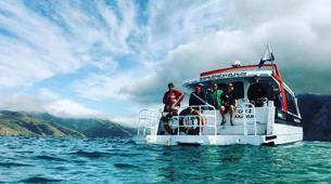 Wildlife Experiences-Akaroa-Swimming with Dolphins in Akaroa-4