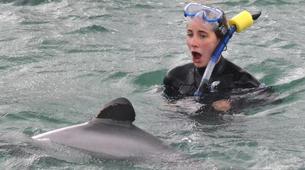 Wildlife Experiences-Akaroa-Swimming with Dolphins in Akaroa-2