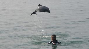 Wildlife Experiences-Akaroa-Swimming with Dolphins in Akaroa-12