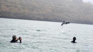 Wildlife Experiences-Akaroa-Swimming with Dolphins in Akaroa-9