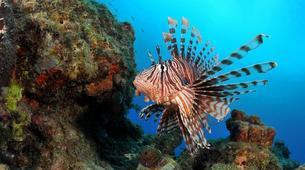 Snorkeling-Réserve Cousteau-Randonnée palmée dans la réserve naturelle Cousteau en Guadeloupe-5