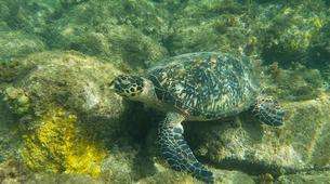 Snorkeling-Réserve Cousteau-Randonnée palmée dans la réserve naturelle Cousteau en Guadeloupe-6