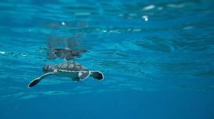 Snorkeling-Costa Adeje, Tenerife-Snorkeling excursion from Costa Adeje, Tenerife-4