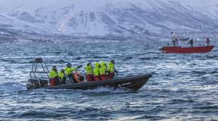 Experiences Wildlife-Tromsø-Whale watching safari cruise & RIB boat from Tromsø-4