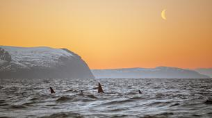 Experiences Wildlife-Tromsø-Whale watching safari cruise & RIB boat from Tromsø-1