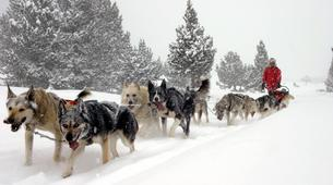 Dog sledding-Andorra-Mushing excursion in Port d' Envalira-2