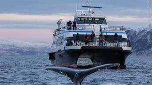 Experiences Wildlife-Tromsø-Whale watching safari cruise & RIB boat from Tromsø-5