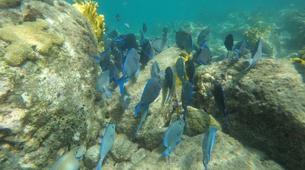 Snorkeling-Réserve Cousteau-Randonnée palmée dans la réserve naturelle Cousteau en Guadeloupe-4