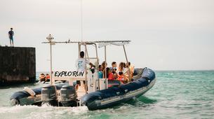 Experiences Wildlife-Lagon de Saint-Gilles-Observation des dauphins et cétacés à Saint-Gilles, La Réunion-4