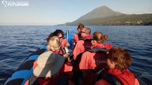 Wildlife Experiences-Pico-Whale watching tour in Lajes do Pico in Pico Island-2