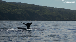 Wildlife Experiences-Pico-Whale watching tour in Lajes do Pico in Pico Island-4