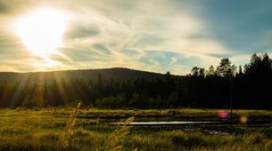 Tierwelt Abenteuer-Rovaniemi-Moose Wild Safari near Rovaniemi-3