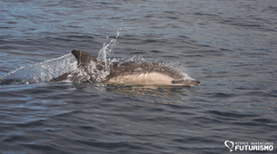 Wildlife Experiences-Ilha do Pico-Swimming with dolphins tour around Lajes do Pico in Pico Island-1