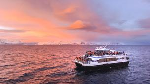 Wildlife Experiences-Lofoten-Lofoten Sightseeing & Shuttle Boat-2