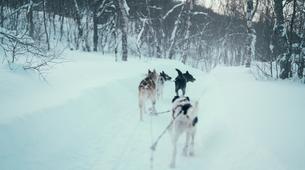 Experiences Wildlife-Tromsø-Dogsledding, Visit to the Tromsø Ice Domes & Reindeer Visit Tour near Tromso, Norway-6