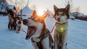 Experiences Wildlife-Tromsø-Dogsledding, Visit to the Tromsø Ice Domes & Reindeer Visit Tour near Tromso, Norway-3