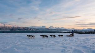 Chiens de traîneau-Tromsø-Dog sledding tour in Tromso-2