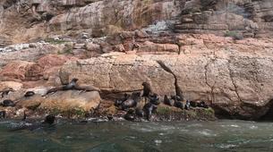 Wildlife Experiences-Plettenberg Bay-Seal Viewing in Plettenberg Bay-1