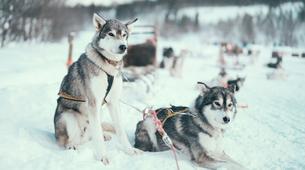 Experiences Wildlife-Tromsø-Dogsledding, Visit to the Tromsø Ice Domes & Reindeer Visit Tour near Tromso, Norway-5