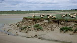 Hiking / Trekking-Baie de Somme-Guided Hiking in the Baie de Somme-5