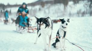 Chiens de traîneau-Tromsø-Dog sledding tour in Tromso-3